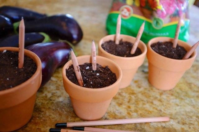 Les crayons Sprout qui se transforment en plantes